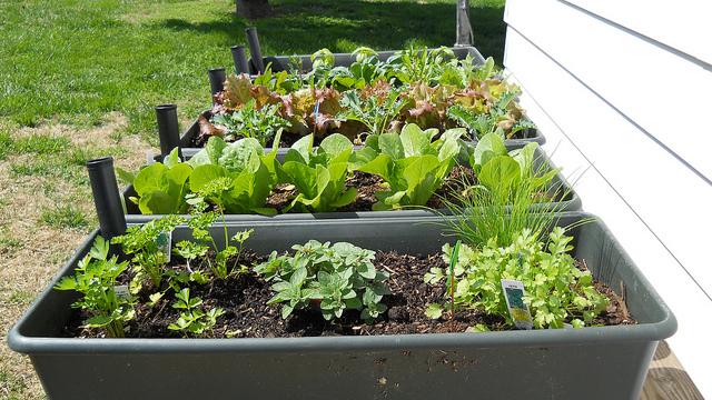ซึงการปลูกพืชเชิงธุรกิจนั้นในต่างประเทศ ทำกันเป็นล่ำเป็นสัน  สร้างรายได้ให้กับประเทศไม่น้อย และที่สำคัญการปลูกพืชผักเหล่านี้ใช้ระยะเวลาสั้น  ...