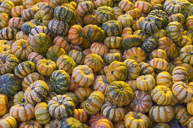 ฟักทอง Pumpkin