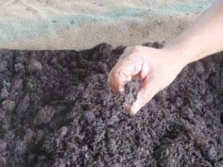 ปุ๋ยชีวภาพ Organic Fertilizer